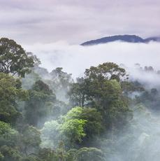 Las tropikalny