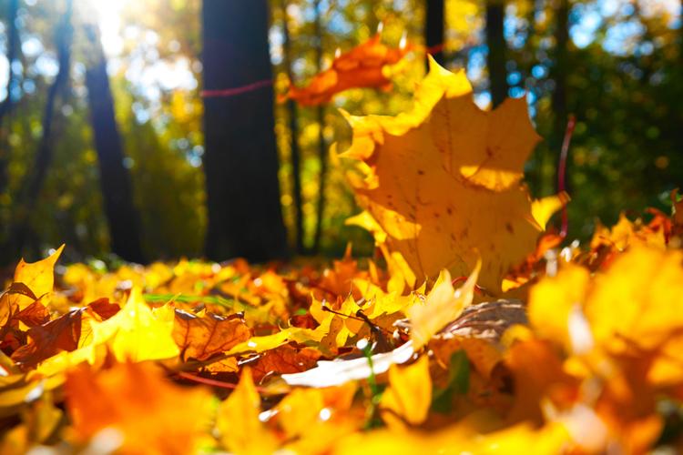 liście w parku rozświetlone jesiennym słońcem