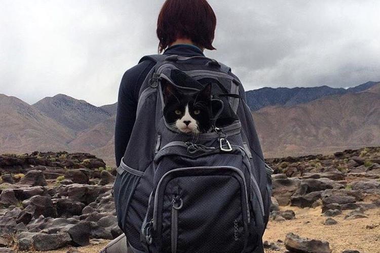 Zdjęcia kotów w podróży