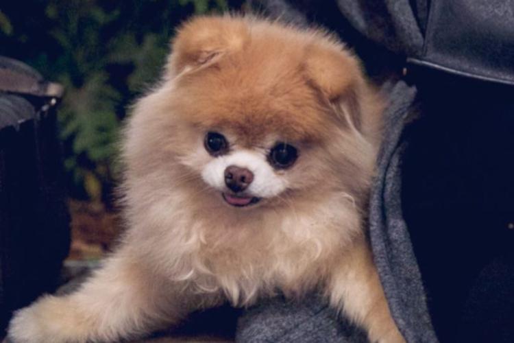 Najsłodszy pies świata