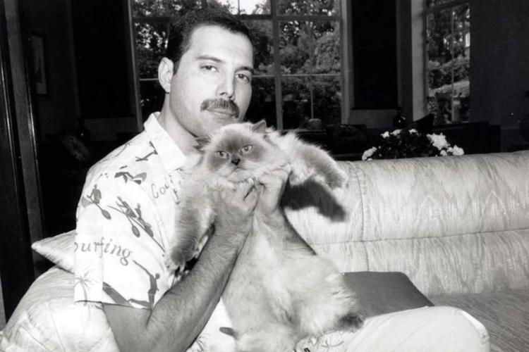 Freddie Mercury przed śmiercią.