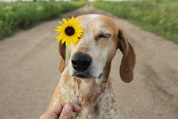 pies podróżnik