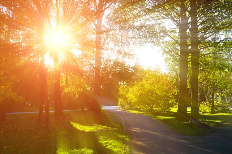 słońce w parku - koniec lata