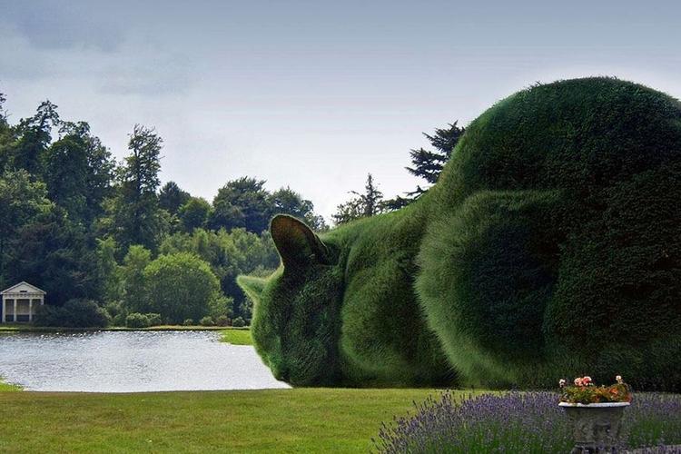 Ogromne zielone koty
