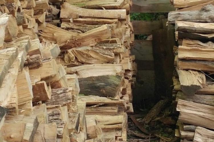 Foto zagadka z kotem na drewnie